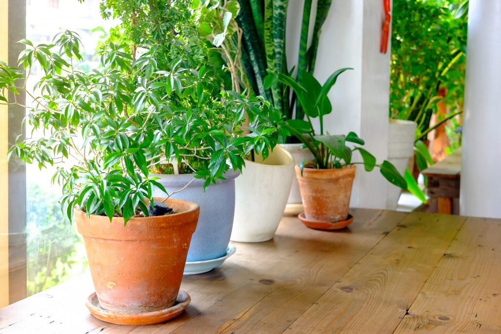 Plants in pots beside the window