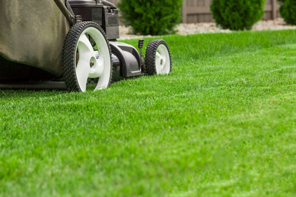 Mawing the lawn using a lawnmawer