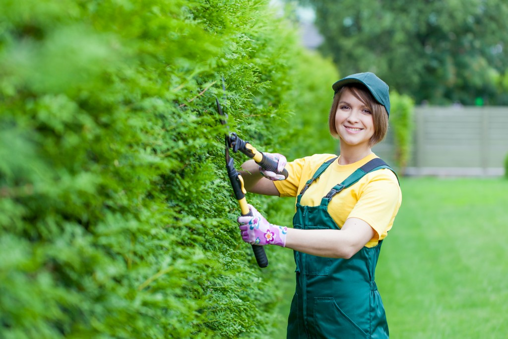 woman trimming the hedges